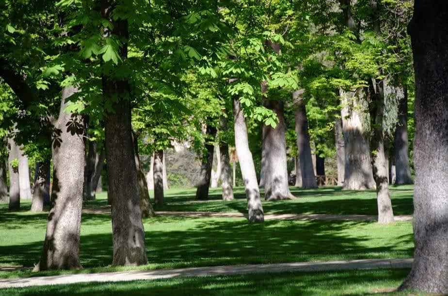 Le parc du Retiro